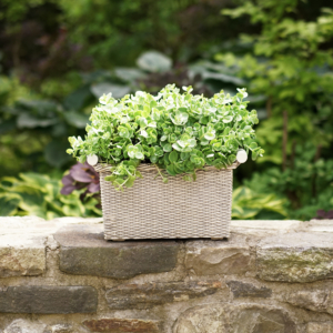 """This is my Martha Stewart Faux Wicker Trough Planter. I love planting succulents in troughs like these. Made of durable resin, this planter comes in two sizes - 16"""" by 8.4"""" and 20"""" by 8.4"""" with drainage holes and raised feet."""
