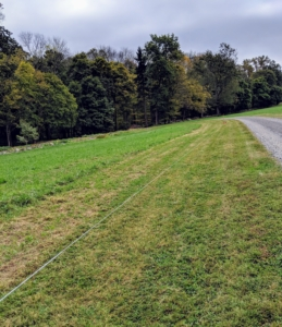 At first, this area through the hayfield was just an open and very plain space, where I grew hay for my horses. I thought it was a perfect stretch of landscape for a long allee. Designing any garden takes plenty of planning, time and patience. Here, the area chosen was mowed and measured. The twine indicates the edge of the planting bed.