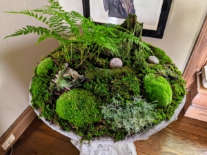 My gardener, Mike Harding, made this woodland moss arrangement for inside my home. Moss is a very slow growing wild plant so it should never be harvested in large amounts - in fact, it is illegal to take any moss from national forests without permission. Once the season is over, we always make sure the moss we harvested is returned to the forest where it can regenerate and flourish.