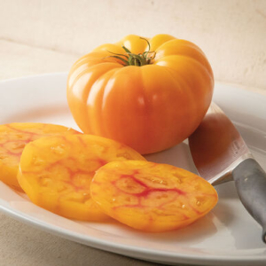 'GinFiz' is a new refined bicolor heirloom-type hybrid. It offers traditional heirloom character plus leaf mold resistance, reduced stem scarring, and tolerance to shoulder cracking. This tomato has a nice balance of sweetness and acidity. (Photo from Johnny's Selected Seeds)