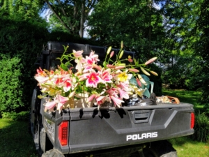 Here is one filled with beautiful lilies ready to be transported to my house. The back cargo area makes it very convenient to move flowers and plants to and from my gardens. We do so much carting around the farm, it is important to have a roomy and durable back space for tools, supplies, plantings, etc.