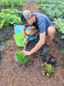 Here, Brian is giving the harvested lettuces a little rinse before they go up to my Winter House kitchen.