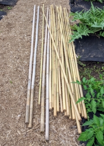 Bamboo canes are easy to buy in bulk, and can be found in a variety of sizes. These canes are about eight to nine feet tall.