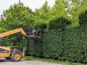 Once the front face is done, our Hi-Lo is moved in, so Pasang could trim the uppermost sections. The Hi-Lo is very useful, and because the hedge is accessible from the parking lot, it always comes in handy for this task.