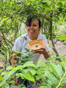 Here's my housekeeper, Elvira, just starting to pick the first blueberries of the season. She is using two-pint wooden berry picking baskets made from natural flat wood slats.