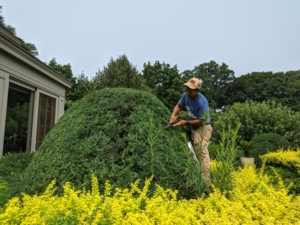 I prefer much of the trimming be done manually so the leaves are not damaged. Hand shears are user-friendly and leave hedges looking flat and tidy.