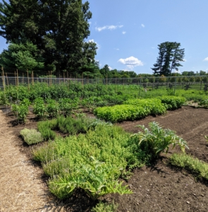 This year, I planted lots of delicious herbs in this garden. We designated the center beds for this year's crops - they're doing great as well - sage, rosemary, thyme, and more.