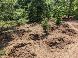 The mulch is dropped in mounds and then spread evenly throughout the space. Spreading a three to four inch layer of mulch will suppress weed germination, retain moisture, and insulate the soil.