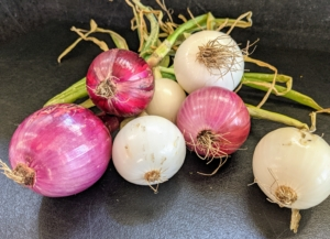 The onions look wonderful, too - Ryan picked just a few. We planted a lot of white, yellow and red onions. Onions are harvested later in the summer when the underground bulbs are mature and flavorful. I always look forward to the onion harvest!
