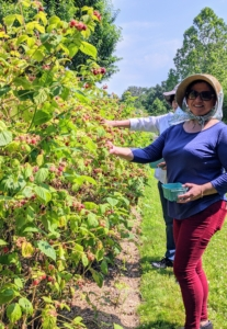 Here's Enma picking more red raspberries nearby. It's a very warm and humid day - hats and proper sun protection are a must.