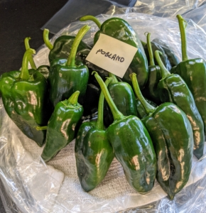 Poblanos are mild chili peppers named after the Mexican state of Puebla where they were first grown. They're one of the most popular peppers used in Mexican and Tex-Mex cooking because they're not very spicy, but have a really great flavor, especially when roasted.