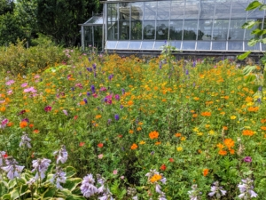 I hope you are able to enjoy some of the wildflowers where you live. Turning an outdoor space into a charming meadow is an easy, low-cost way to help the environment. Meadows provide fabulous habitats for wildlife, beneficial insects, and forage plants for pollinators - they're a good thing!
