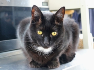 Blackie is my greenhouse cat. He loves people and is always ready for a rub or some playtime.