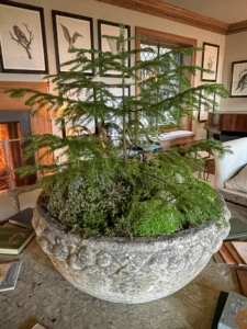Some of the mosses that grow at Skylands include sphagnum moss, pincushion moss, Mountain Moss Leucobryum, plume moss, and bog moss. My gardener at Skylands, Mike Harding, created the woodland arrangements - I think they are very pretty.