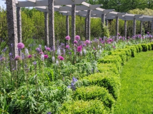 In May, this pergola garden is filled with lots of blue and purple flowers. This palette of colors is a big favorite at the farm – it grows more colorful and vibrant every spring, and then it goes through another dramatic transformation in summer.