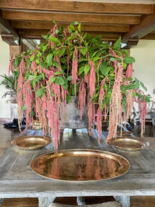 On another day, stunning amaranth decorated the Living Hall. Their velvety flowers are dense with drooping tassels. Blooms come in richly saturated harvest hues, and they hold their colors and shapes even when dry.