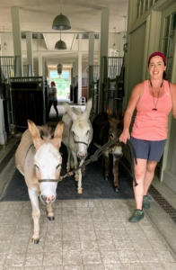 In the afternoon, Helen and Dolma walk the donkeys to their large paddock just outside the stable.