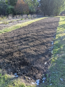 Here's the bed after all the garlic was planted last autumn. The garlic bed is located behind my main greenhouse not far from my berry bushes.