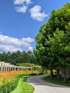 Across from the long pergola - a stand of stately bald cypress trees, now full of gorgeous soft green needle-like foliage.