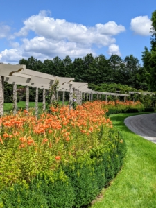 The entire pergola border and its surrounding gardens, trees, and other specimens provide a spectacular show every year.