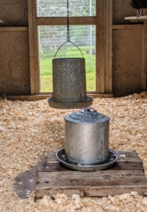 Inside the coops, we always provide water and feed. The hanging feeders are filled with organic layer feed. It provides the hens with protein, which helps them lay strong and healthy eggs.