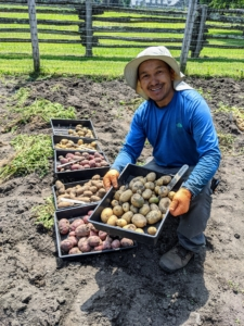 Here's Chhiring with a tray of 'Sunrise Gold' potatoes. These have yellow skin and moist yellow flesh. These large round to oval tubers have very shallow eyes. They make great breakfast potatoes.