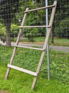 We also made this ladder - I always provide all my birds with multiple places to roost. The pigeons love to sit on the rungs and watch the neighboring peafowl and geese.