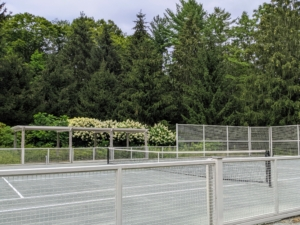 From a distance, one can see all the stunning white hydrangeas growing behind my tennis court. I started planting hydrangea shrubs many years ago and they've always bloomed so profusely from year to year.