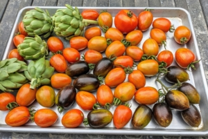 Here's a tray of tomatoes and a few artichokes. The globe artichoke, Cynara scolymus, is popular in both Europe and the United States. Artichokes are actually flower buds, which are eaten when they are tender.