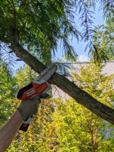 Here, Ryan uses the STIHL GTA 26, which offers impressive high cutting performance, quiet operation, excellent ergonomics, and long battery life in a small hand tool. This mini saw fits right in the palm of one's hand and is great for smaller jobs and tight spaces. For this branch Ryan makes two cuts to safely remove the limb without stripping any bark. The first cut should be about a third to halfway down the branch. Cutting in sections also prevents splitting and allows the large portion of the branch to fall and not tear into or damage the tree.