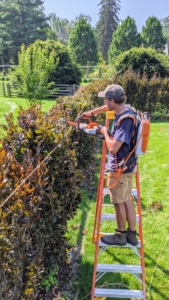 Brian uses the battery-powered hedge trimmers to lop off the tops more precisely. This trimmer is lightweight, starts instantly and delivers quiet, powerful performance.