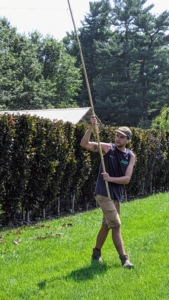 And as each section is done, Brian moves the bamboo stakes and twine to the next area to be pruned.