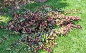 It doesn't take long for the ground to fill with clippings – and this is just from one section.