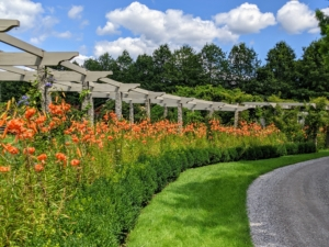 And here is the pergola border now - bursting with gorgeous orange. This side of my long pergola is one of the first areas I see when I drive into my property.