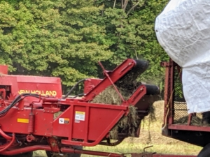 Here is a bale of hay as it is lifted in the baler's reel and moved up the conveyor belt.