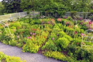 Here's a look at my flower garden in early summer, when so many flowers are blooming. I hope you're able to save some of your favorite flower seeds, so you can enjoy them again next year.
