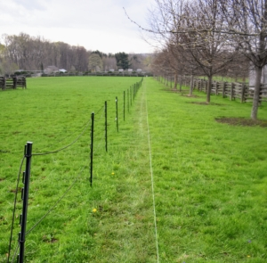 Two and a half years ago, I decided I wanted to plant hedges on both the east and west sides of the South Paddock as well as the west side of what I call the Southeast Paddock. These paddocks are quite long, so we needed quite a few trees. Here is one side before the planting began.