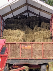 In less than an hour, the wagon is almost completely filled with bales of hay. Each bale is about 15 by 18 by 40 inches large. The number of flakes in the bale is determined by a setting in the baler. Many balers are set for 10 to 12 flakes per bale. I have two hay trailers. Each one can hold about 150-bales.