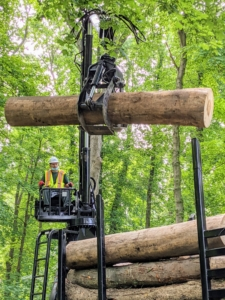 Last June, I had many ash trees cut down and removed because of damage done by the ash borer beetle. The Emerald Ash Borer is responsible for the destruction of tens of millions of ash trees in at least 30-states. The larvae kill ash trees by tunneling under the bark and feeding on the part of the tree that moves water and sugars up and down the trunk. These ash trees can be saved and also used for lumber.