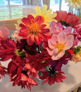 Experiment with the varieties – dahlias look great arranged in different colors.