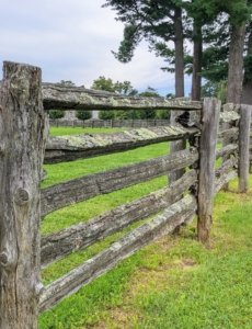 Here is a closer look at the fence with its original posts and antique railings. Many of you have commented on how much you admire these fences. The railings are sandwiched between two cedar posts and attached to the inside of one of them. The other supports the railings from the other side.