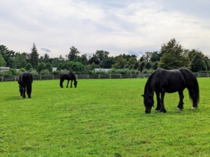 And the fences keep my handsome steeds safe in their pastures.