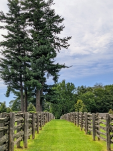 Some of the trees are just so majestic. The Eastern White Pine is a stand-out beauty. These trees, which were actually already here when I purchased the property, are located in one of the paddocks and can be seen from across the farm.