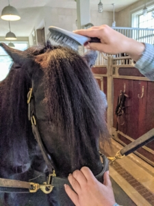 Here, Helen brushes Banchunch's forelock, which is similar to the bangs on humans and falls forward over the front of a horse's head. The forelock is part of the horse's mane, the distinctive ridge of hair that grows on the top of a horse's neck and runs from the top of the head to its withers.