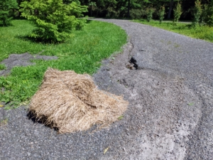 The rains were so strong that this bale came apart during the storm.