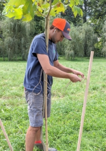 We use natural jute twine for many of our projects around the farm. Jute twine is a vegetable fiber that can be spun into coarse, strong threads. It is 100-percent biodegradable and pollution-free. Here, Brian holds the tree perfectly straight and then secures the stake with twine.
