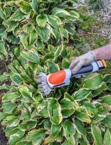 Here's Ryan trimming the flower stalks from the hostas. This handy tool features two attachments – grass shears and shrub shears – to meet specific trimming needs. This has run times of up to 110 minutes on a single charge. The HSA 25 also allows users to complete tasks with clean, efficient cuts.