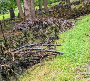 Any fallen or cut branches are neatly placed on the side of the carriage road, so they can be picked up later and chipped for top dressing.