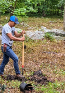 The crew is very experienced at planting many trees at a time. To help planting go quickly and smoothly, the crew works in an assembly line process. Domi digs all the holes for planting - each about 10 inches deep.