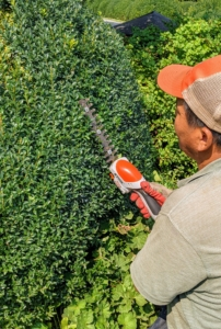 Here, Phurba is using our STIHL HSA 25 Battery-Powered Garden Shear. It's lightweight with a rubberized handle for user comfort and a secure grip. It comes with its own roll-up case to store all its accessories. The hedge shear attachment with double-sided cutting blades cut both directions. It's one of our favorite tools – it's very light and handy.